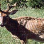 Chronic Wasting Disease identified in Fillmore County