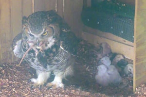 The Owl Center has baby owls!