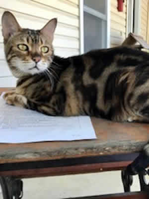 Fillmore County Journal - Cute Pets