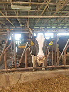 Fillmore County Journal - Fillmore County Dairy Night on the Farm 2020